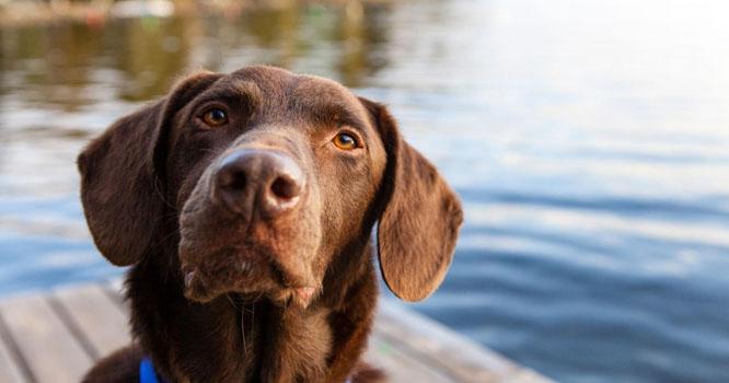 چین میں کتے نے مالک کو مرنے سے بچا لیا