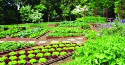 مختلف سبزیاں لگانے کے آسان طریقے