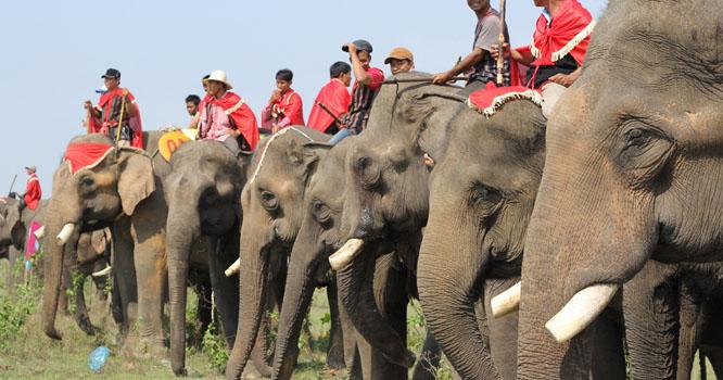 ویتنام میں ہاتھیوں کی ریس کا انعقاد