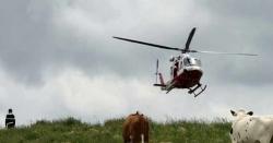 اٹلی ، پہاڑپر پھنسی گائے کو بحفاظت بچا لیا گیا
