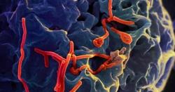 جنوبی افریقہ سے خطرناک وائرس پاکستان منتقل ہونیکاخطرہ ،لاکھوں افرادکی زندگیاں دائوپرلگ گئیں