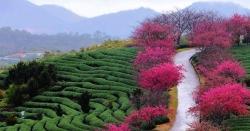 چین میں موسم بہار کی آمد