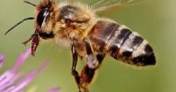 امریکہ میں لاکھوں شہد کی مکھیاں دو دن سے ایک کار کا پیچھا کر رہی ہیں، وجہ سن کر آپ دنگ رہ جائیں گے