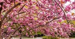 چین میں ہرطرف رنگوں کی بہار