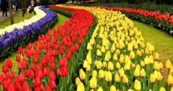 نیدرلینڈز: قوس قزاح کے رنگ بکھیر تے گُل لالہ کی نمائش