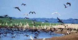 چین کے دریا پر ہزاروں مہاجر پرندوں کی آمد