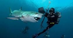 سمندر میں درجنوں شارک مچھلیوں نے ڈائیورز کو گھیر لیا