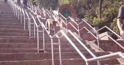 نیپال: مندر کی سیڑھیوں پر بندر کا پھلسنے کا انوکھا انداز