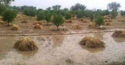 بارش سے متاثرہ کسانوں کیلئے حکومت کا شاندار اعلان، بڑی خوشخبری سنادی