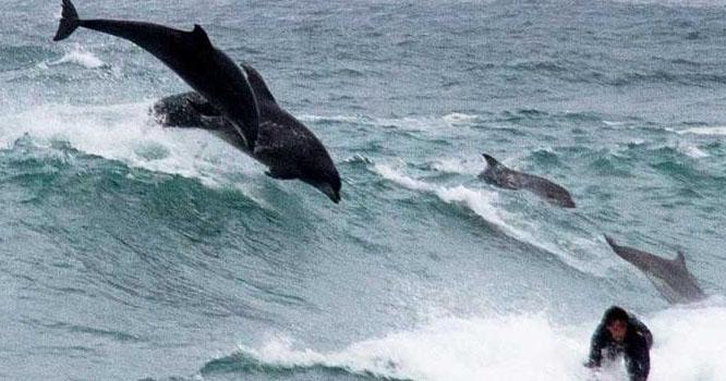آسٹریلیامیں شرارتی ڈولفنز کی مستیاں