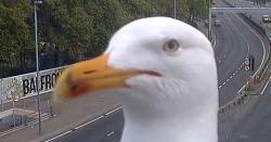 پرندے بھی کیمرے پر آنے کے شوقین نکلے