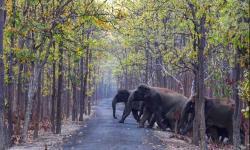 گڑھے سے ہاتھی کے بچوں کو بحفاظت نکال لیا گیا