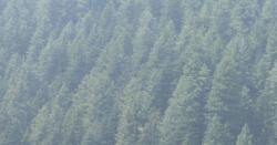 لنگرپورہ جنگلات میں کسی بھی قسم کی کٹائی نہیں ہورہی ہے، عبدالرشید خان