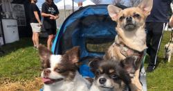 کینیڈا: کتوں کی تفریح کیلئے سالانہ میلہ
