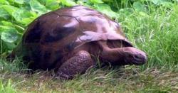 دنیا کا سب سے بوڑھا جانور، 187 سالہ کچھوا جوناتھن