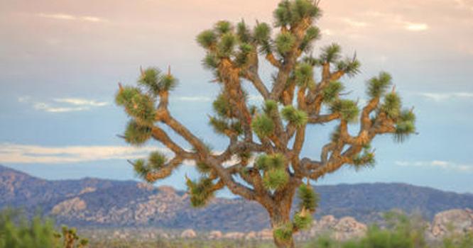 وہ درخت جو اندھیری راتوں میں اتنا چمکتا ہے کہ روشنی میلوں دور جاتی ہے، یہ درخت کہاں واقع ہے؟