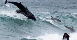 آسٹریلیا میں شرارتی ڈولفنز کی مستیاں