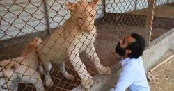 کراچی میں نجی چڑیا گھر، شہری کے پاس شیروں سمیت نایاب جانور موجود