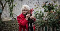 مرغ کی بلند بانگ، کیس عدالت پہنچ گیا، فرانسیسی عوامی رائے منقسم