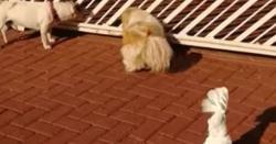کتے کو دیکھ کر طوطا بھی بھونکنے لگا