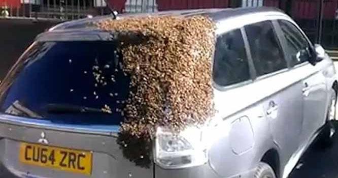 اسکاٹ لینڈ، کار پر ہزاروں شہد کی مکھیوں کا حملہ