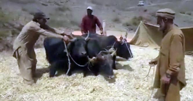 گلگت بلتستان کے کسانوں کا حکومت سے بڑی سبزی منڈی قائم کرنے کامطالبہ