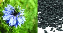-قدرت کا کرشمہ ! ایسا پودا جو لاعلاج بیماریوں کا بھی علاج کرسکتا ہے