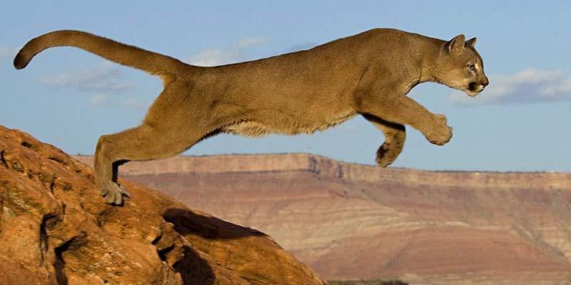 حملہ آور شیر کو امریکی شہری نے ہاتھوں سے مار ڈالا