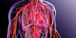 تنگ اور بند شریانیں کھولنے والی وہ غذائیں جو عام مگر انکا علم آپ کو آج تک نہیں ہوگا؟
