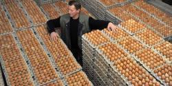انڈونیشیا ، پولٹری بحران پر قابو پانے کیلئے1 کروڑ انڈے تلف کرنے کا اعلان