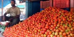 ٹماٹر کے سرکاری ریٹ 145روپے ، مارکیٹ میں کتنے کا بیچا جا رہا ہے؟ گراں فروشوں کی من مانیاں ، عوام میں پریشانی کی لہر