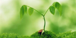 پودوں کو بڑھانے کے لئے کا آسان گھریلو ٹوٹکہ