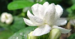 پھولوں کو تازہ رکھنے کے لئے کا آسان گھریلو ٹوٹکہ
