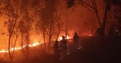 چین میں جنگل میں آگ بھڑک اٹھی، 18 فائر فائٹرز سمیت 19 افراد ہلاک