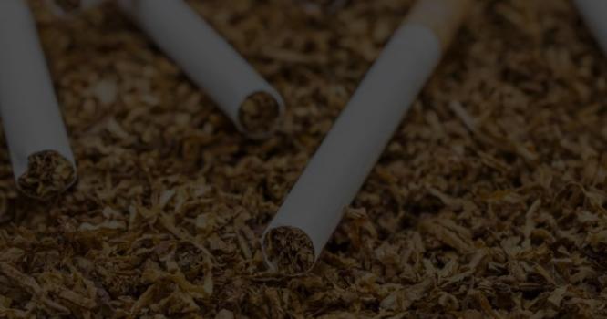 سب مہنگا ترین علاج سوچتے رہے مگر تمباکو کے پتوں سے کرونا ویکسین کی تیاری کر لی گئی