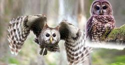 خوفناک آنکھوں والا پرندہ الّو مگر کیا آپ جانتے ہیں کہ اس کو بیوقوف پرندہ کیوں کہا جاتا ہے؟