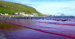 ساحل خون آلود، سمندر کے پانی کا رنگ بھی سرخ ہوگیا، افسوسناک وجہ