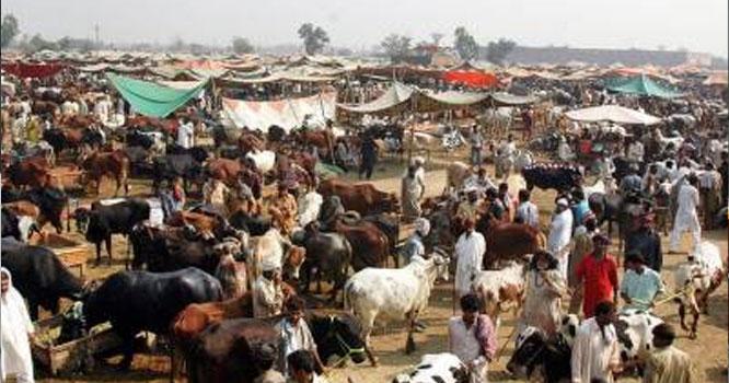 عیدالاضحی: اسلام آبادمیں کتنی مویشی منڈیاں لگائی جائیں گی اوریہ کن کن علاقوں میں ہوں گی ،جانیں تفصیلات اس خبرمیں