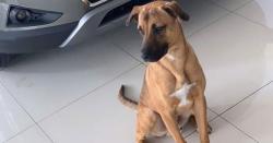 آوارہ کتے کو سیلز مین کی نوکری مل گئی