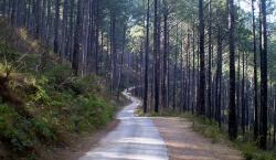 بند جنگل کے رقبہ سے سڑک نکالنے کے لیے محکمہ جنگلات کے متعلقہ ذمہ داران کو بھاری رقم دے کر خرید لیا گیا