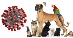کون سا جانور پالنے والے کرونا سے زیادہ متاثر ہورہے ہیں؟ تحقیق کے حیران کن نتائج سامنے آگئے