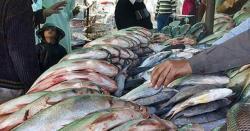 تازہ مچھلی کی پہچان کیسے ہوتی ہے؟ چند آسان طریقے