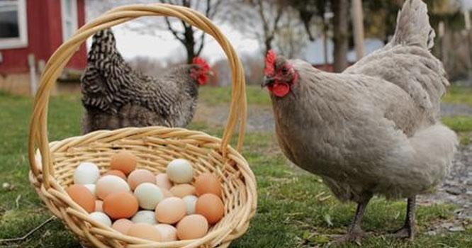 مرغیوں اور انڈوں کی قیمت میں ہوشربا اضافہ ہو گیا