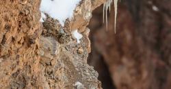 کیاآپ اس تصویرمیں چھپے چیتے کوتلاش  کرسکتے ہیں ؟جس میںبیشترافرادناکام رہتے ہیں