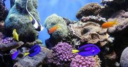 سمندروں کا تحفظ انسانوں کو تین گنا فوائد لوٹا سکتا ہے