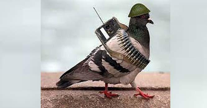بھارت نے ایک اور پاکستانی کبوتر کو جاسوس قرار دیدیا