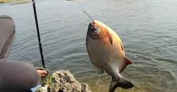 استور:مچھلی کاغیرقانونی شکارکرنے والوں کیخلاف کریک ڈائون