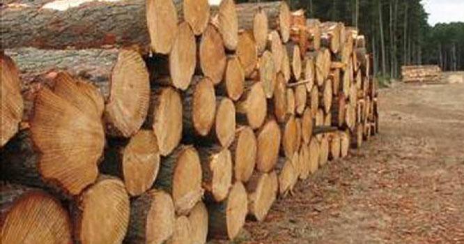 مری ، سمگلنگ کی کوشش ناکام ، لاکھوں کی لکڑی ضبط