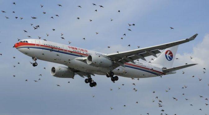 Flocks of Birds Halt Flight Operations at Lahore Airport