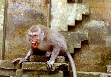 Four monkeys 'terrorize' Rawalpindi residents